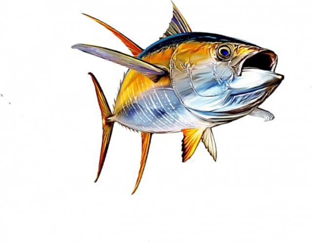 Wahoo fish clipart image transparent download Pin by Johan Stenborg on Yellowfin tuna | Pinterest | Yellowfin tuna image transparent download
