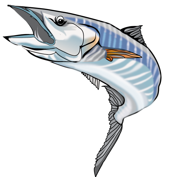 Wahoo fish clipart png library download Sailfish Clipart wahoo - Free Clipart on Dumielauxepices.net png library download