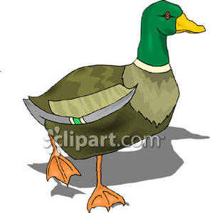 Walking ducks clipart graphic royalty free library Walking Mallard Duck - Royalty Free Clipart Picture graphic royalty free library