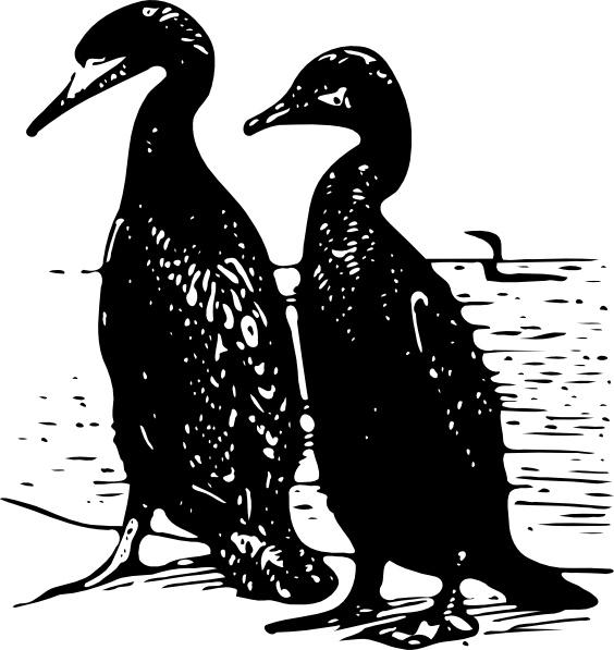 Walking ducks birds clipart jpg library download Walking Ducks Birds clip art Free vector in Open office ... jpg library download