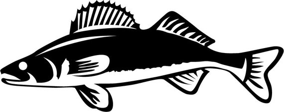 Walleye outline clipart svg transparent download Walleye Vinyl Fishing Decal Sticker Boat Decal Tournament ... svg transparent download