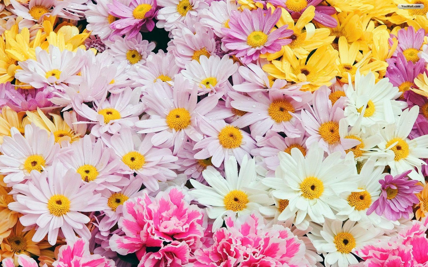Wallpaper flowers free png download Wallpapers Flowers Free (76+) png download