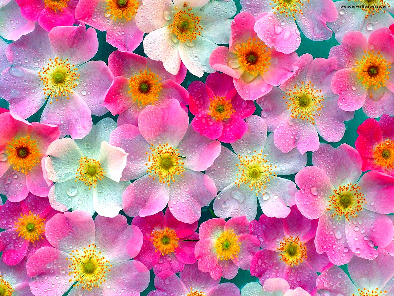 Wallpaper flowers free graphic library stock 46+ HD Flowers Wallpapers | Download Free | SHunVMall graphic library stock