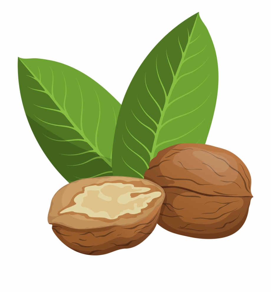 Walnut and chocolate clipart jpg black and white library Walnuts Png Clip Art, Transparent Png Download For Free ... jpg black and white library