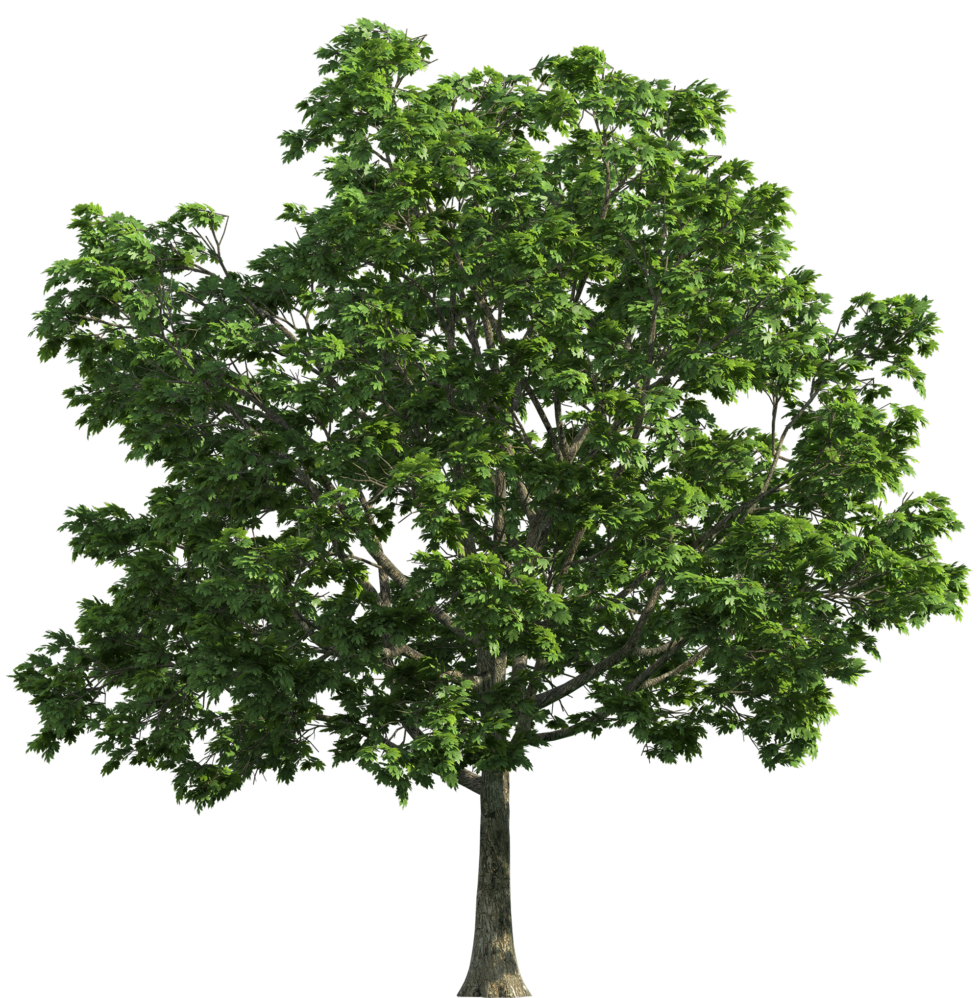 Walnut tree clipart banner freeuse download Tree_Transparent_PNG_Clip_Art-1108.png (2000×2037) | Tree_alpha ... banner freeuse download