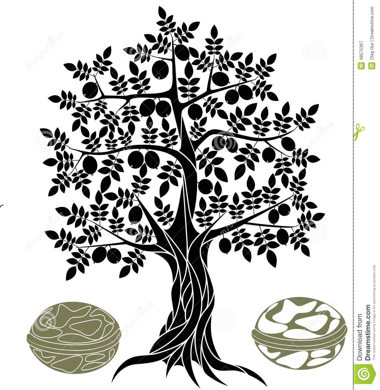 Walnut tree clipart clipart