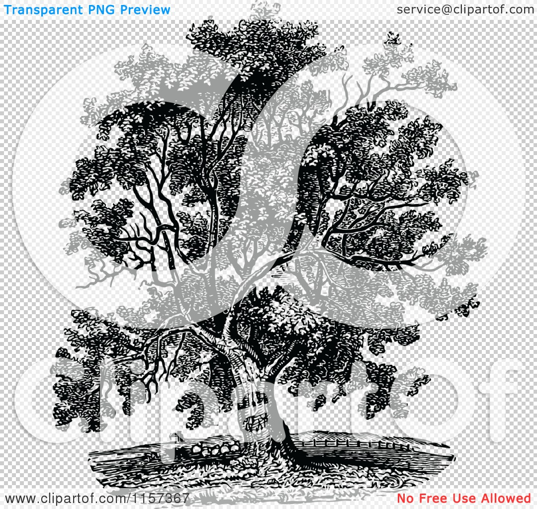 Walnut tree clipart clipart picture freeuse stock Clipart of a Retro Vintage Black and White Mature Black Walnut ... picture freeuse stock