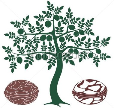 Walnut tree clipart clipart graphic library library Walnut tree clipart clipart - ClipartFest graphic library library