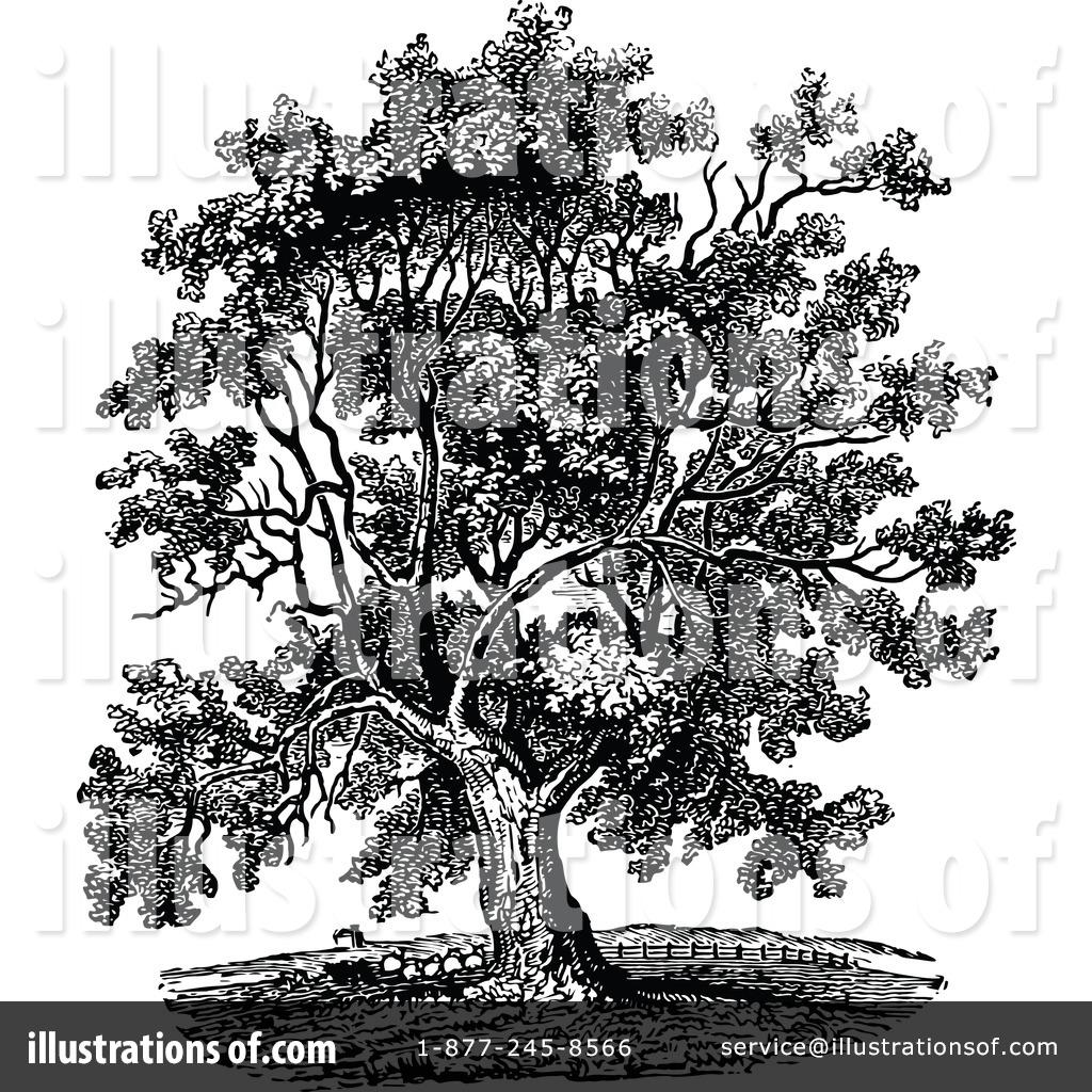 Walnut tree clipart clipart vector royalty free Walnut tree clipart clipart - ClipartFest vector royalty free