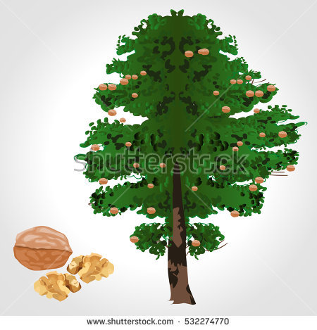 Walnut tree clipart clipart image black and white Walnut Tree Stock Images, Royalty-Free Images & Vectors | Shutterstock image black and white