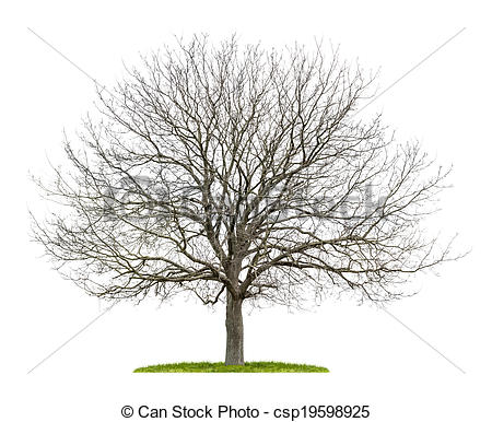 Walnut tree clipart clipart graphic library download Walnut tree clipart clipart - ClipartFox graphic library download