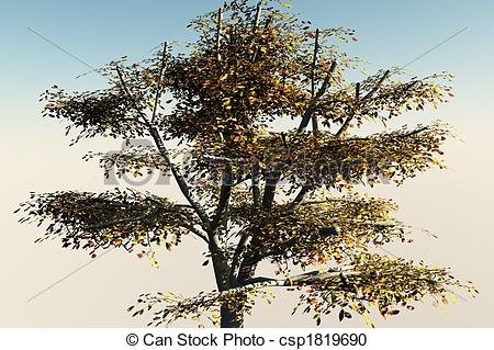 Walnut tree clipart clipart png download Walnut tree Clipart and Stock Illustrations. 951 Walnut tree ... png download