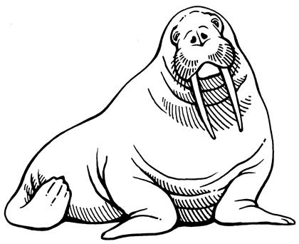 Walrus clipart outline picture free library Walrus Clipart | Free download best Walrus Clipart on ... picture free library