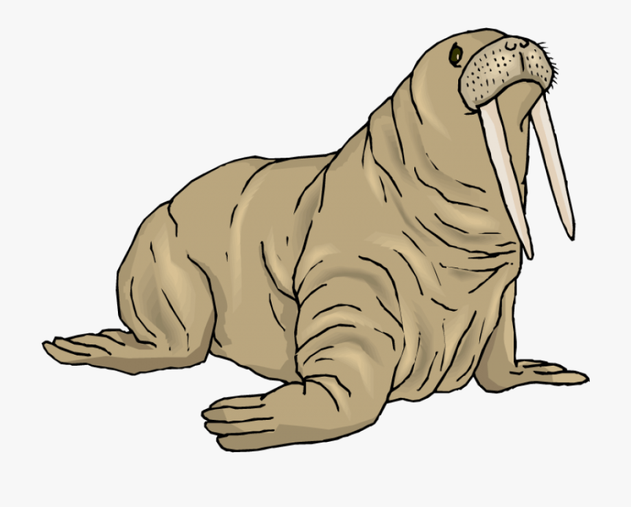 Walrus clipart pictures jpg free stock Walrus Clip Art Free Clipart Images - Walrus Clipart #50145 ... jpg free stock