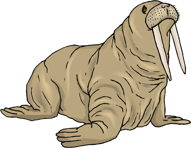Walrus clipart pictures picture library library Walrus Clipart   Clipart Panda - Free Clipart Images picture library library