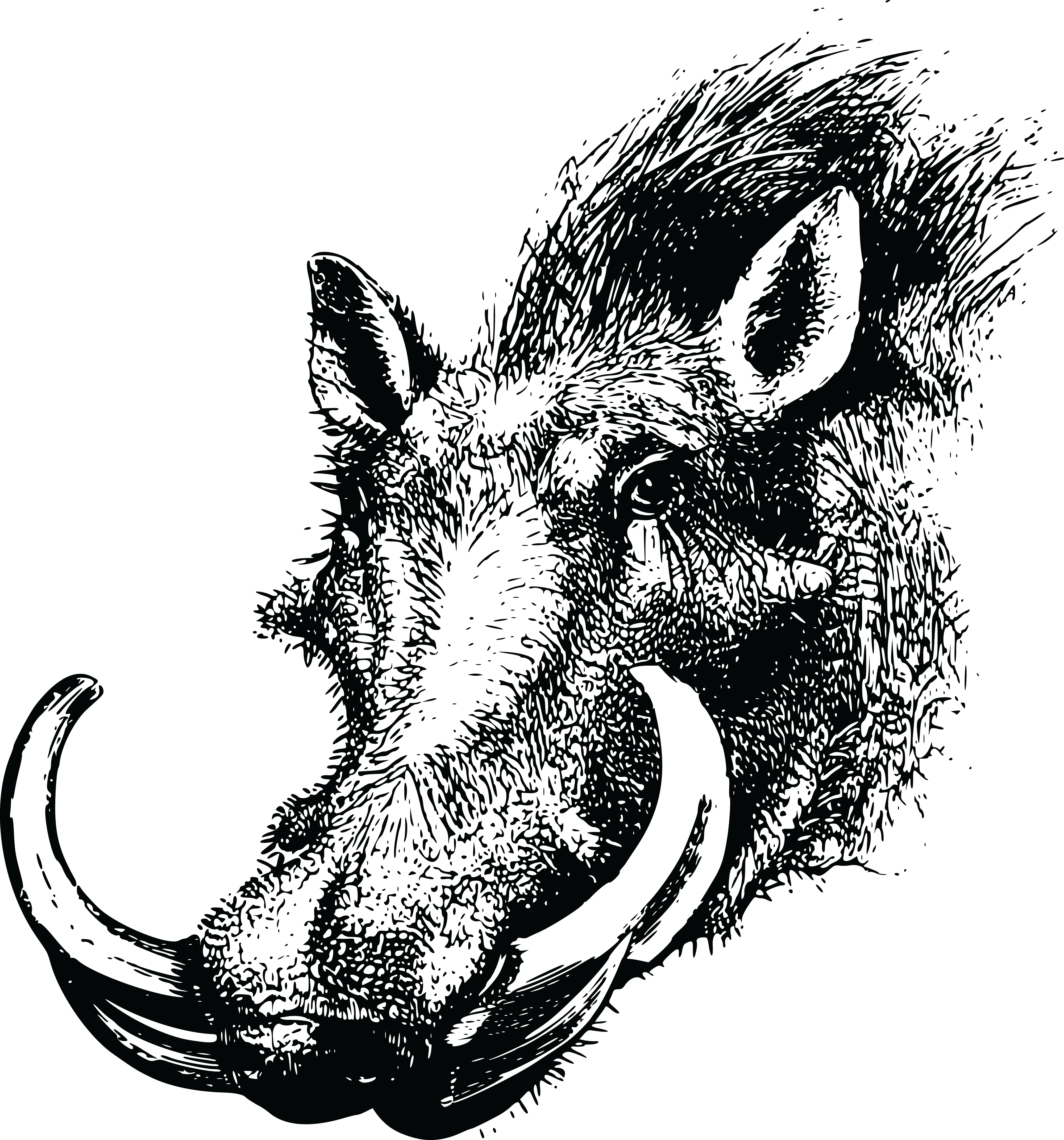 Warthog face clipart png royalty free download Common warthog Wild boar Clip art Animal Silhouettes ... png royalty free download