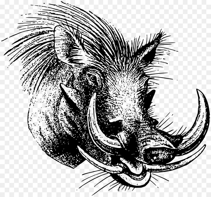 Warthog face clipart clipart royalty free stock Dragon Drawing clipart - Pig, Dragon, transparent clip art clipart royalty free stock
