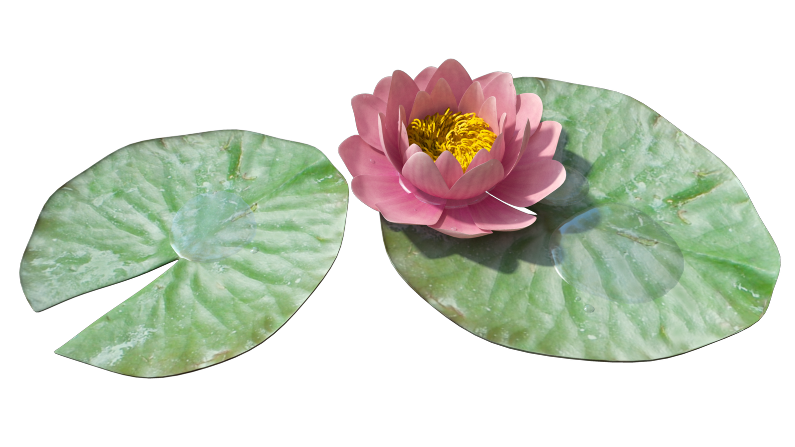 Water lily flower clipart banner royalty free stock Water Lily PNG Transparent Images | PNG All banner royalty free stock