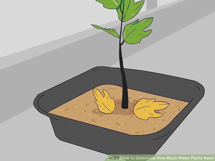 Water clipart for nursery plant picture transparent How to Determine How Much Water Plants Need: 15 Steps picture transparent