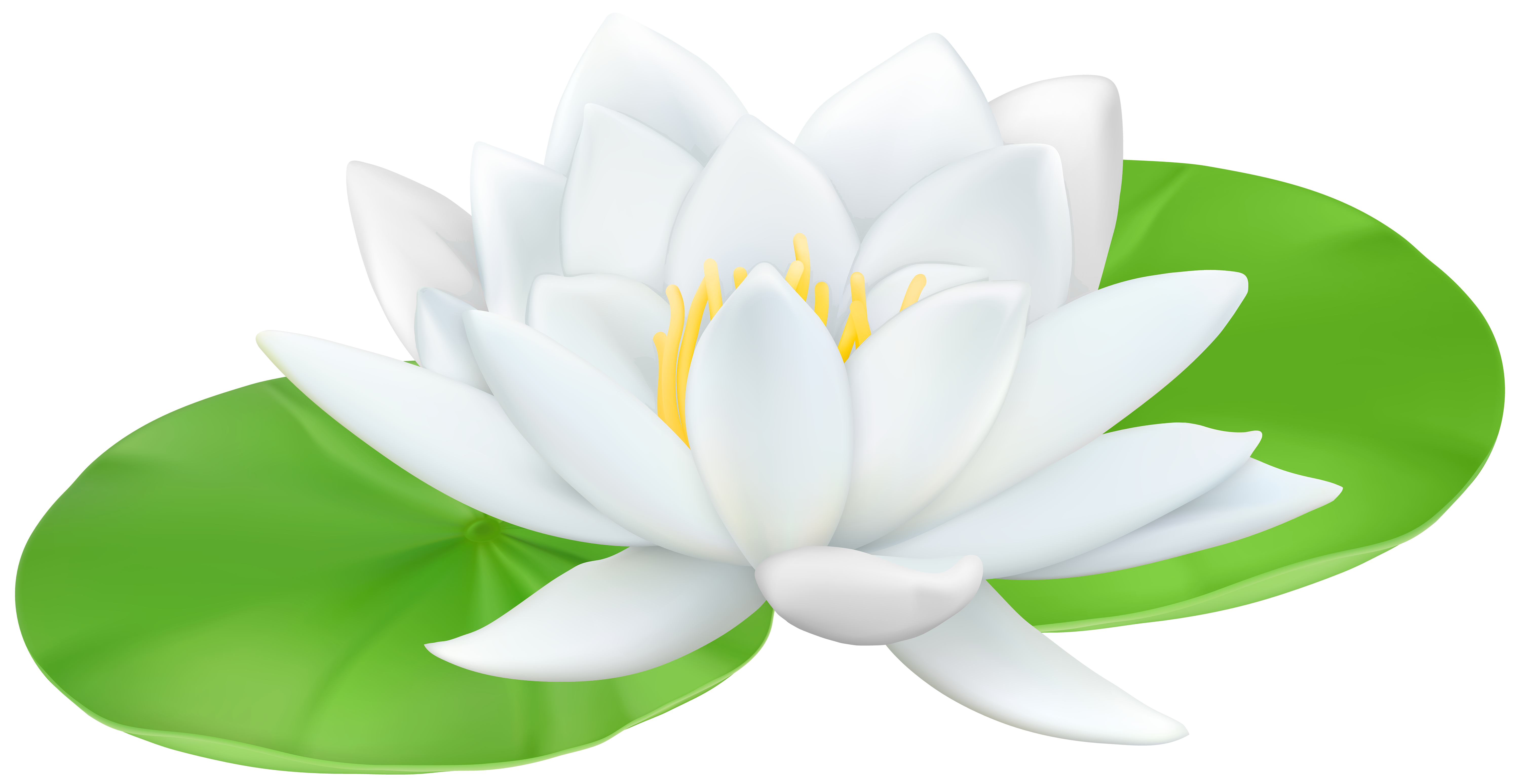 Water lily flower clipart clip transparent library Lily clipart high resolution ~ Frames ~ Illustrations ~ HD images ... clip transparent library