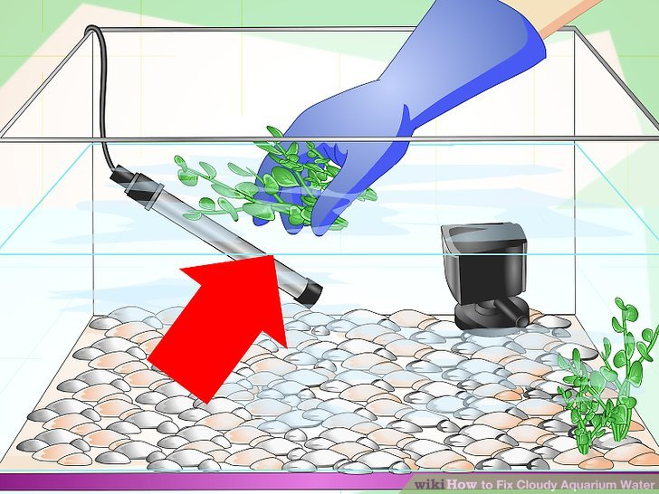 Water filled aquarium clipart vector free How to Fix Cloudy Aquarium Water (with Pictures) - wikiHow vector free