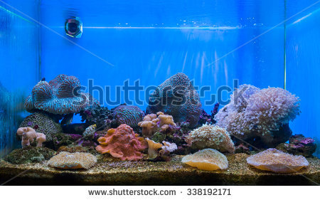 Water filled aquarium clipart clip download Fish Tank Stock Images, Royalty-Free Images & Vectors | Shutterstock clip download