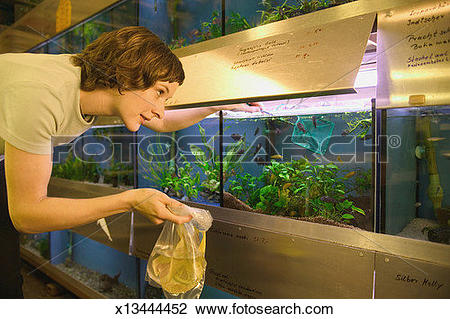 Water filled aquarium clipart clip art Stock Photo of Woman selecting fish in aquarium tank, holding ... clip art
