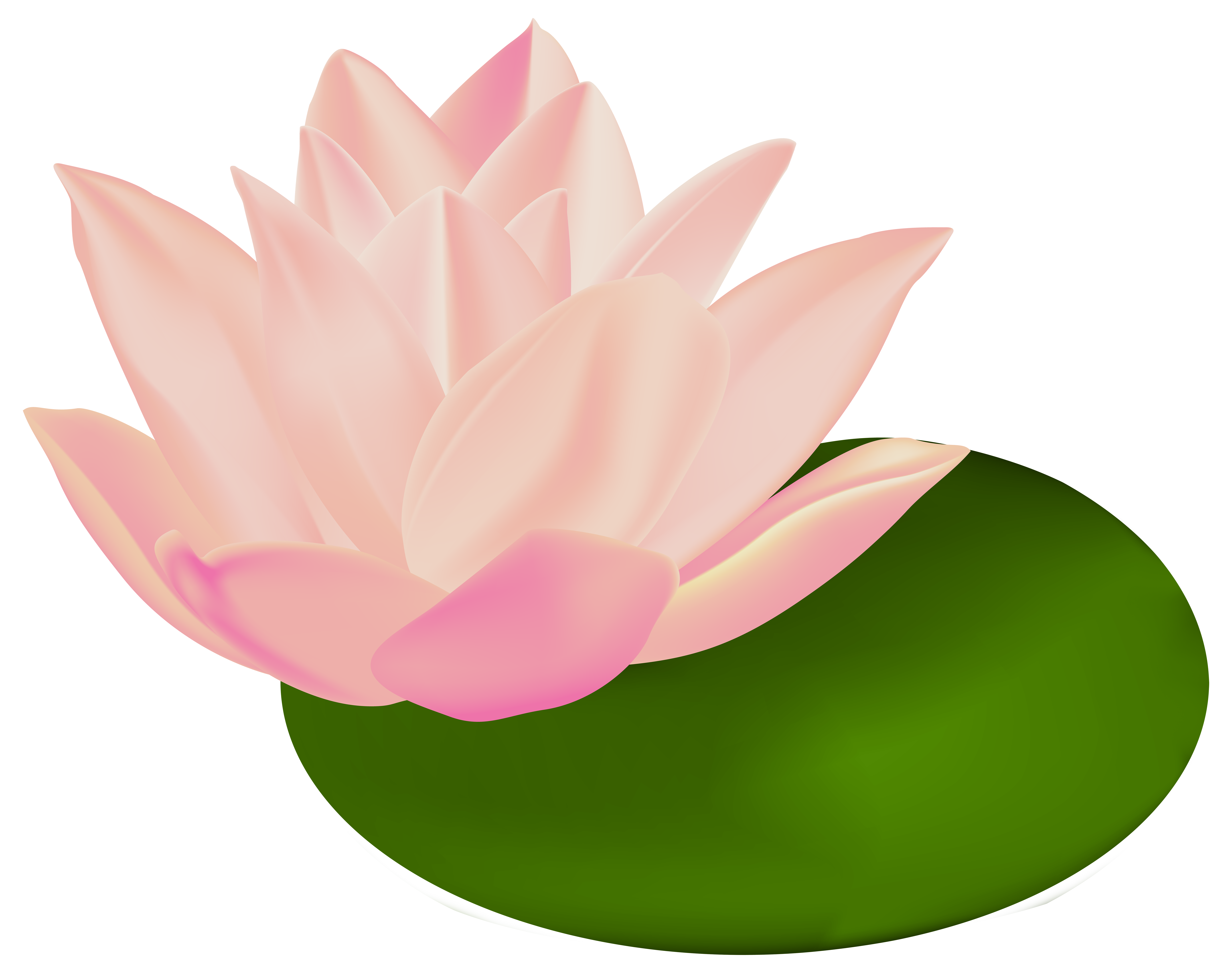 Water lily flower clipart image royalty free stock Water Lily Transparent Clip Art Image | Gallery Yopriceville - High ... image royalty free stock