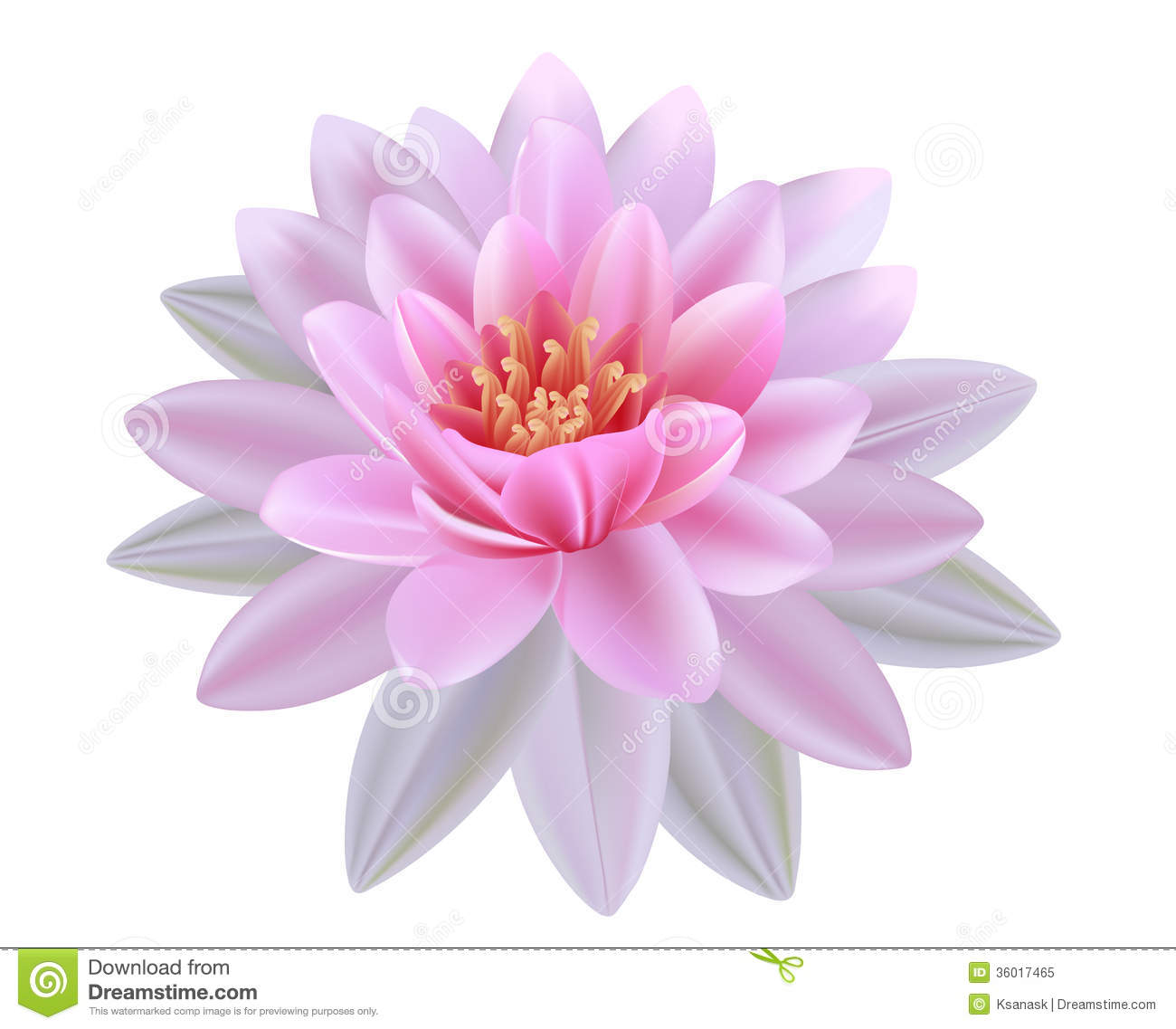 Water lily vector free download picture free stock Water lily vector free download - ClipartFest picture free stock
