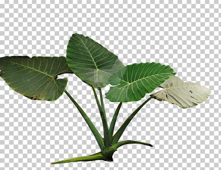 Water on colocasia clipart image transparent download Plant Colocasia Gigantea Tropical Rainforest Tropics PNG ... image transparent download