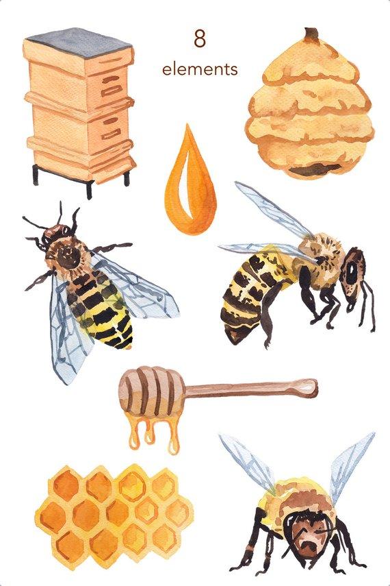 Watercolor bee clipart clip transparent download WATERCOLOR CLIPART, bee clipart, honey, nature, scrapbooking ... clip transparent download