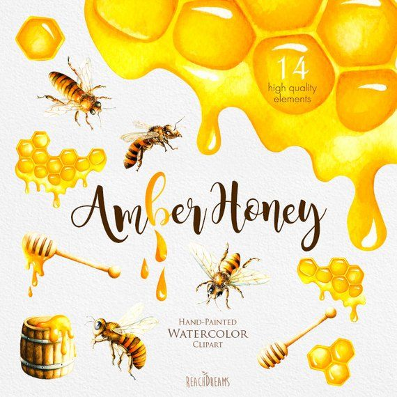 Watercolor bee clipart svg freeuse download Watercolor Honey Bee Clipart, Honeycomb, Hand painted ... svg freeuse download