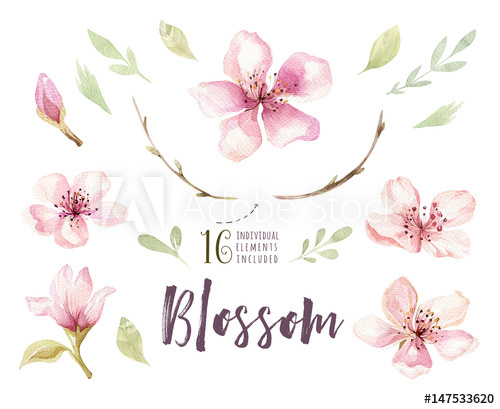 Watercolor boho foliage clipart clip freeuse download Watercolor boho blossom flower set. Spring or summer ... clip freeuse download