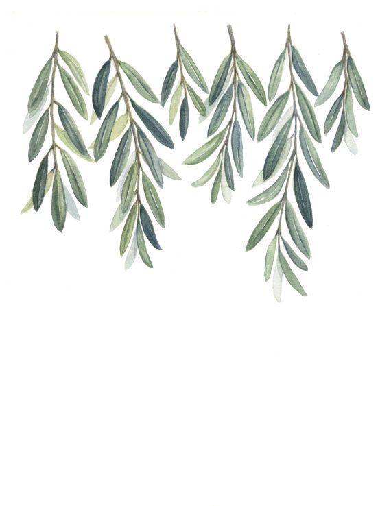 Watercolor bren tree clipart clip art black and white Olive Branches Art Print - Olive Branch Leaves painting ... clip art black and white