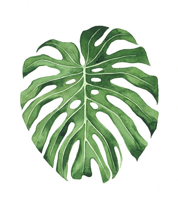 Watercolor bren tree clipart svg library ORIGINAL Monstera Leaf water-colour painting | Monster ... svg library