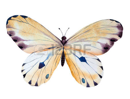 Watercolor butterfly free clipart banner library stock Free butterfly clipart watercolor - ClipartFox banner library stock