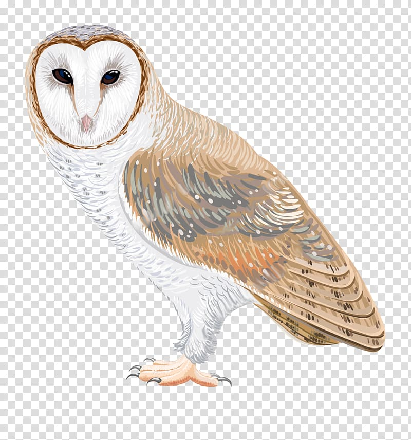 Watercolor clipart barn clipart stock Barn owl Drawing , watercolor owl transparent background PNG ... clipart stock