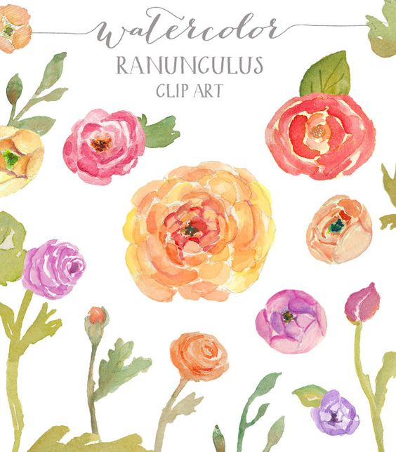 Watercolor clipart flower banner download Watercolor Ranunculus Clip Art | Watercolors, Creative and Clip art banner download
