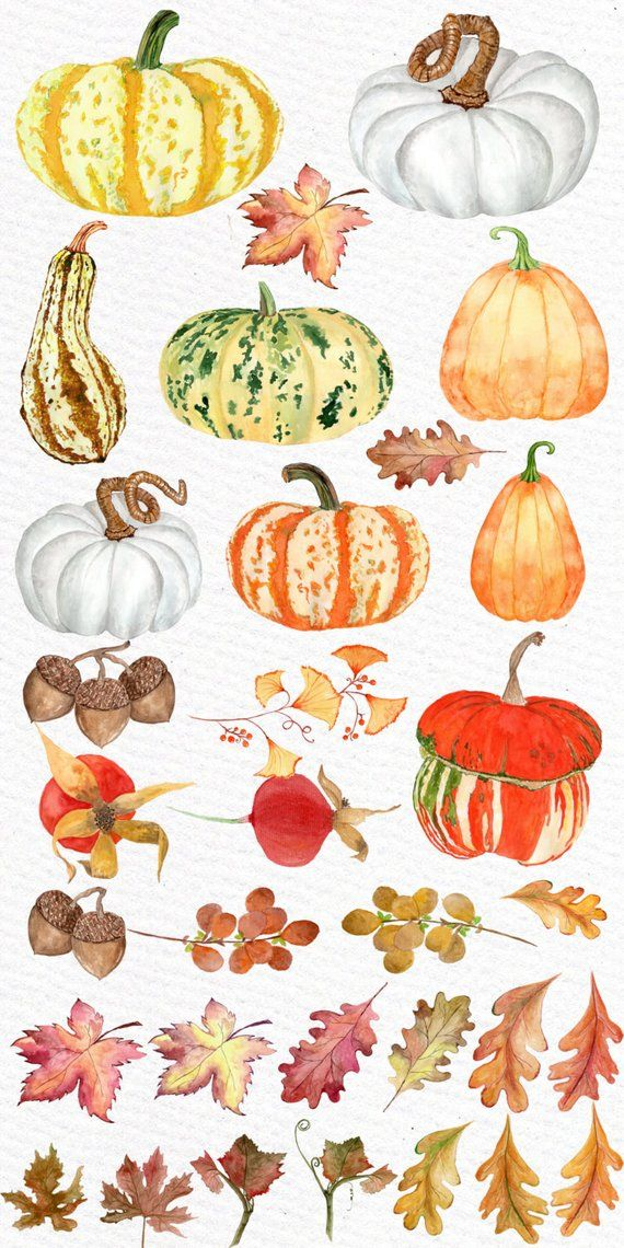 Watercolor clipart free harvest clip freeuse download Watercolor pumpkin clipart: \