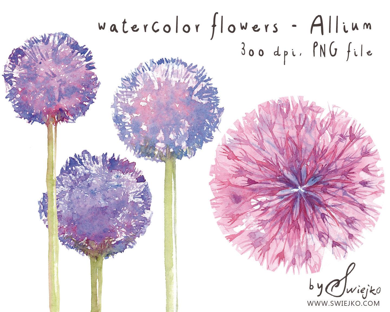 Watercolor flower clipart clip art royalty free Watercolor Clipart, Watercolor Flowers, Flower Clipart, Allium ... clip art royalty free