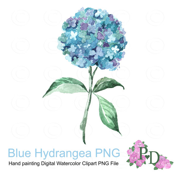 Watercolor flower clipart no background banner free stock Watercolor Clipart Blue Hudrangea Watercolor Clip Art banner free stock
