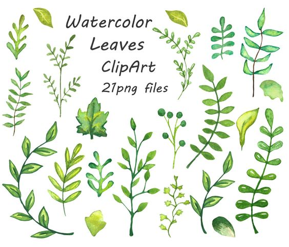Watercolor flower clipart no background image black and white download Watercolor leaves clipart, watercolour clip art, hand painted ... image black and white download