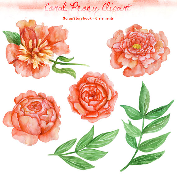 Watercolor flower clipart no background clipart black and white library Peony clipart | Etsy clipart black and white library