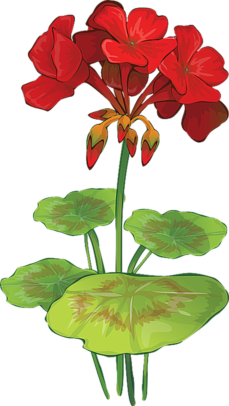 Watercolor geranium clipart jpg free stock Pontiac\'s Rebellion: An Overview in 2019   Printables ... jpg free stock
