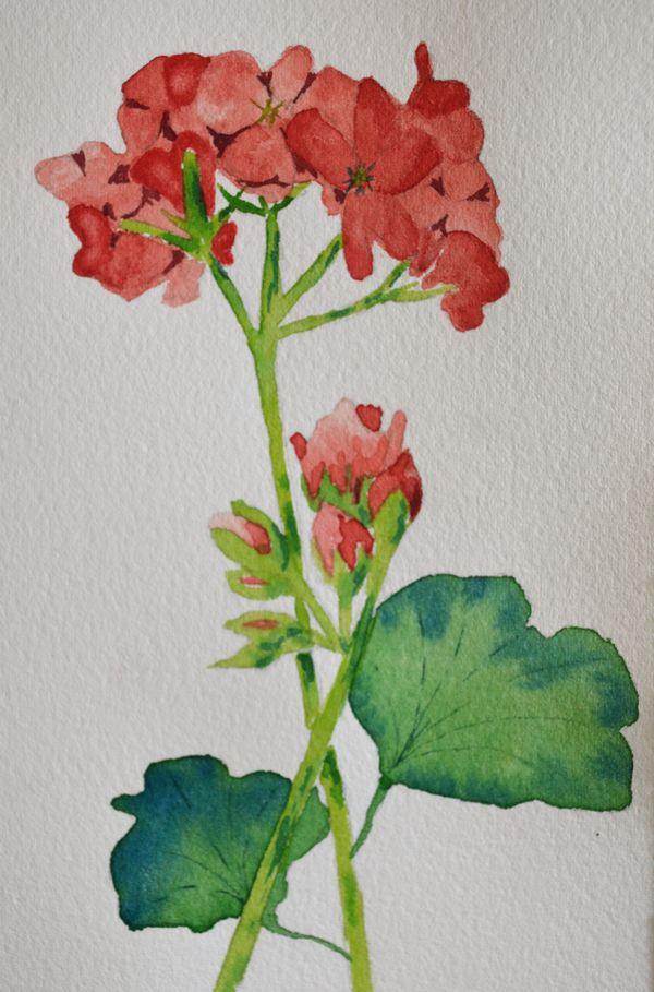 Watercolor geranium clipart jpg royalty free Art, Fine Art-Watercolor Painting of Red Geranium ... jpg royalty free