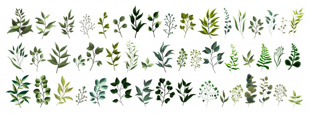 Watercolor greenery clipart clip free download Watercolor Leaves Vectors, Photos and PSD files | Free Download clip free download