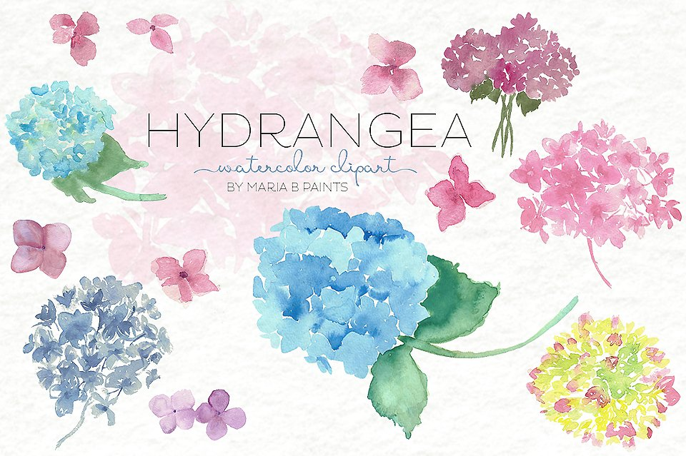 Watercolor hydrangea clipart vector royalty free download Collection of 14 free Watercolor clipart hydrangea crabs ... vector royalty free download