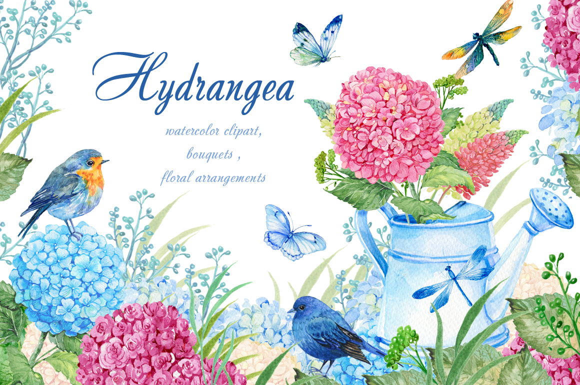 Watercolor hydrangea clipart svg royalty free download hydrangea watercolor clipart svg royalty free download