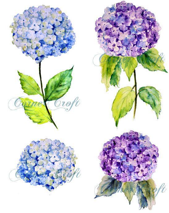 Watercolor hydrangea clipart svg stock Hand painted watercolour blue hydrangea digital clipart ... svg stock