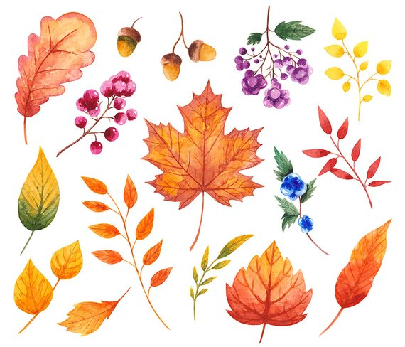 Watercolor leaves fall clipart clipart transparent stock Fall watercolor clipart Autumn clipart Fall clipart Leaves ... clipart transparent stock